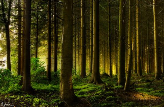 Grimms Forest by RobinHalioua