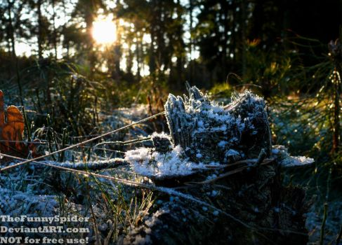 Frosty Afternoon in our moor - Germany 2017 by TheFunnySpider