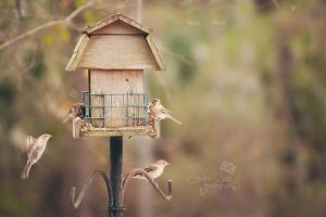 Coming in for a Landing by CandiceSmithPhoto