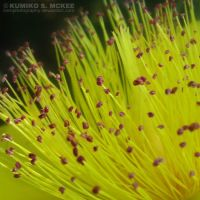 Yellow Flower by KSMPhotography