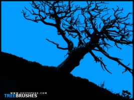 TreeBrushes01 by SuitePSDs