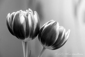 Tulip by misery53