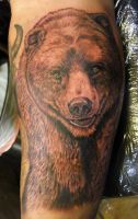 Grizzly Bear by asussman