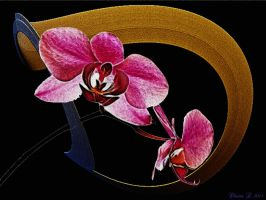 orchid II by oli-one