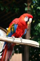 Parrot by ChibiLavos