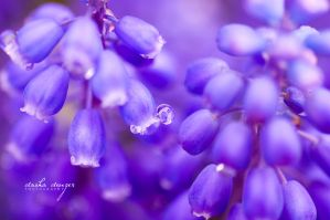 .: Blue Bells :. by onixa