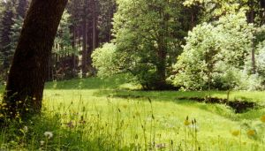 Forests and Meadows TWSS07 by Adarion