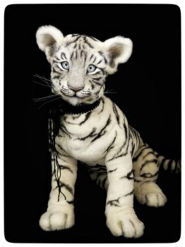 White tiger cub ASIA by KALEideaSCOPE