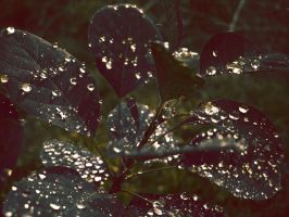 Raining Gold by Betws-Y-Coed