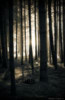 The Woods by hookupsman