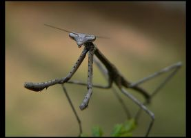 Posed Mantid III by wolfskin