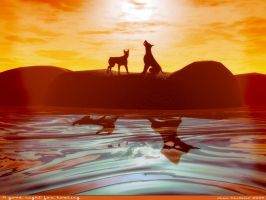 A good night for howling by rlcwallpapers