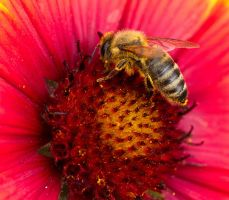 Bees and flowers IX by starykocur