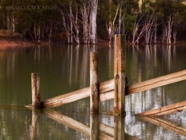 The Fence by FireflyPhotosAust