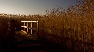 Bridge through the Reeds by switch-sgfx