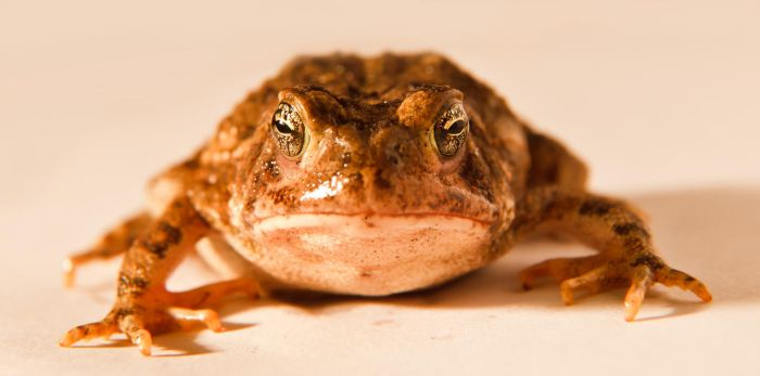 Frog by DrDnar