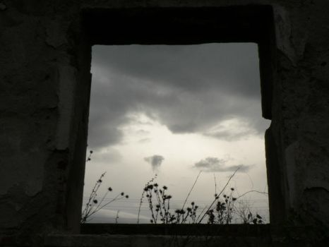 window which opens nature by ewio