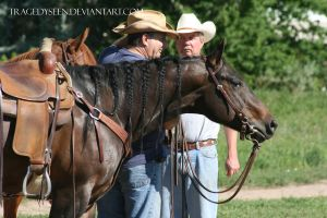 Quarter Horse Stock 89 by tragedyseen
