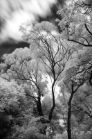 Friday 13th in infrared by moonshadedweller
