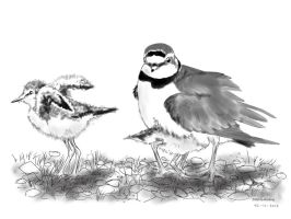 Little ringed plover family by DeBeginning