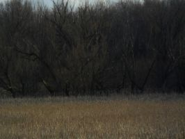 Lake Trail (winter) Marsh 6 by TornPageDyedRed