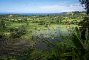 Bali Rice Fields by Yatzenty