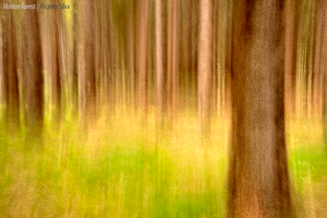 Motion Forest by Rykardo