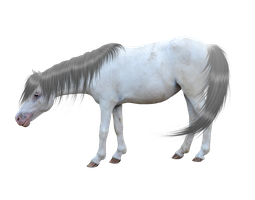 Pre-cut Miniature Horse with Mane + Tail by consideritfox