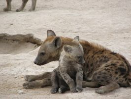 hyena family 2 by sinekotdiabl