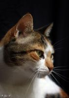 yuli the cat by Yair-Leibovich