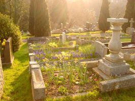Nightstock 790 by Nightstock