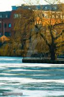 Tree over ice by HSChacko