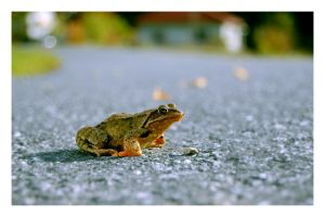 A frogs' life by Naitzel