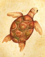 Watercolour turtle by Fuugis