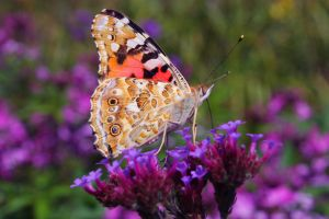 Butterfly on a flower by sun-shards