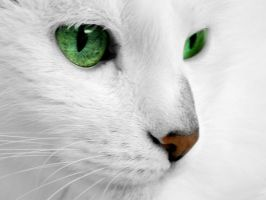 White Cat FOR FREE by rafalhyps