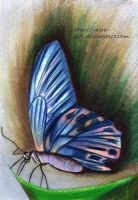 The butterfly. by VeIra-girl