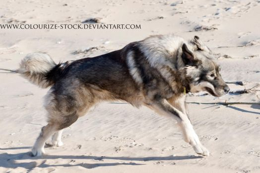 Dog 2 by Colourize-Stock