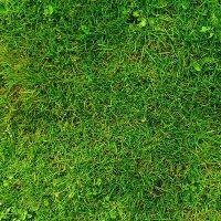 Grass texture by Free-designs-net