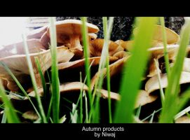 Autumn products by niwaj