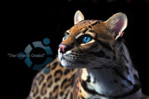 EgFox The Oneiric Ocelot Blue by Eg-Art