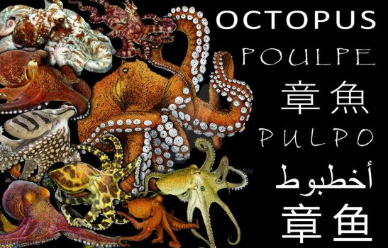 Octopus-poster by rogerdhall