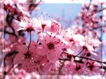 Blossoming by An1mel0vah