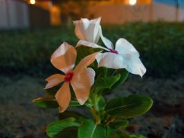 Mom's Garden's Flowers by ai-chyan
