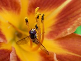 Wasp I by Roseslover