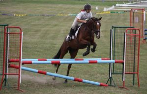STOCK Showjumping 490 by aussiegal7