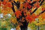 Colors of Autumn 0035 10-15-14 by eyepilot13