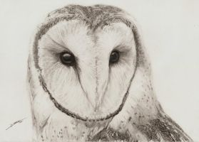 Barn Owl by AmBr0