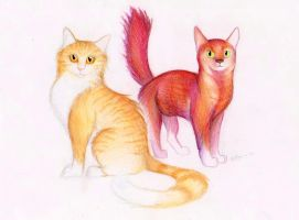 Leafpool and Squirrelflight by EleanorTopsie