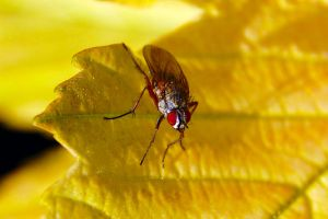 Fly on a yellow leaf by umboody